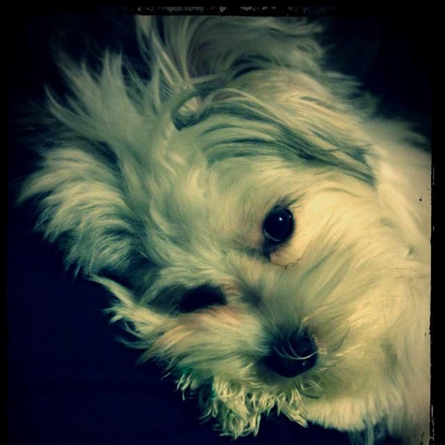 My pup Bentley