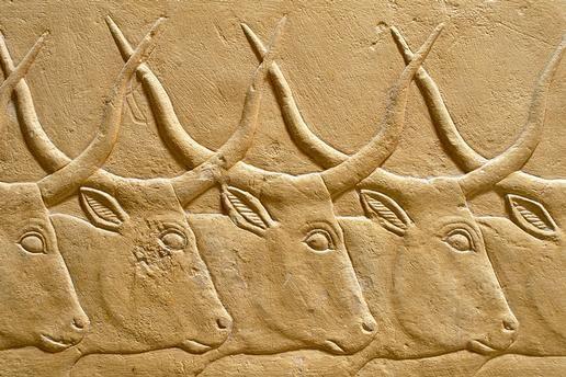 Reliefs de taureaux aux cornes entrelacées de la tombe de Kagmeni, située dans la nécropole de Saqqarah, près de l'ancienne capitale égyptienne Memphis - VIe dynastie, Ancien Régime.