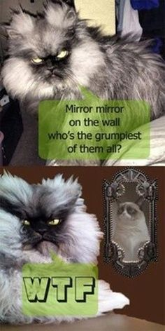 Mirror mirror on the wall, who's the grumpiest of us all? WTF
