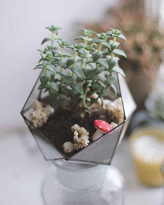 Icosaèdre Terrarium 15 Cm Pour Les Cactus Ou Sukkulenta