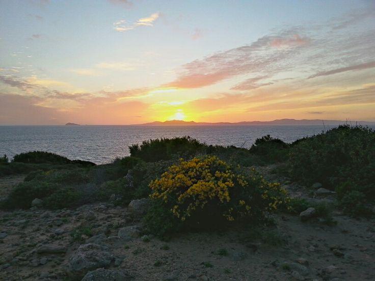 Ginestra al tramonto da Candiani