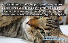 Il existe une astuce simple et efficace pour éliminer l'odeur de pipi des chats en moins de deux ! L'astuce est d'utiliser un peu de litière et du bicarbonate de soude pour s'en débarrasser. Regardez :-)  Découvrez l'astuce ici : http://www.comment-economiser.fr/eliminer-odeur-urine-chat.html