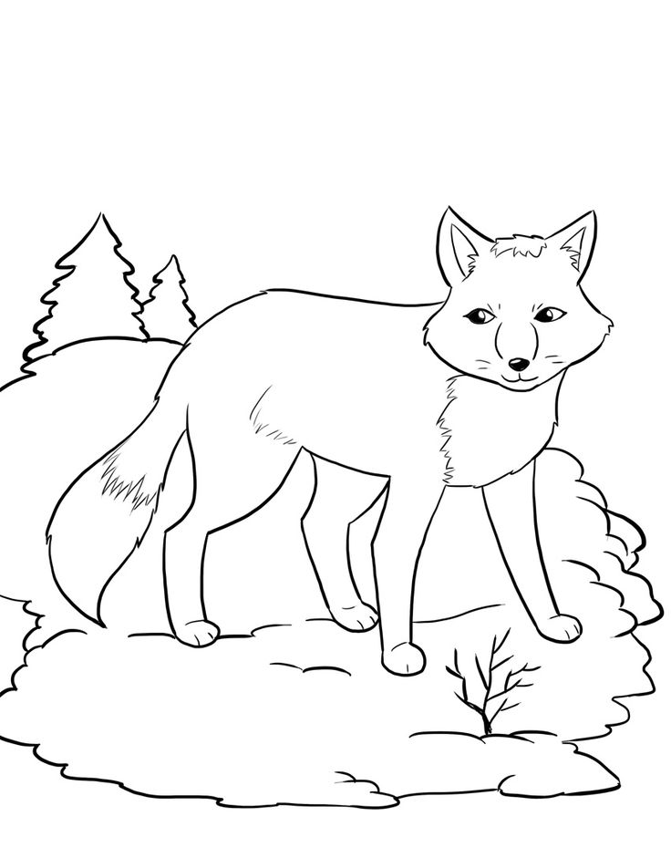 FREE Artic Fox Coloring Page For Kids Winter Coloring