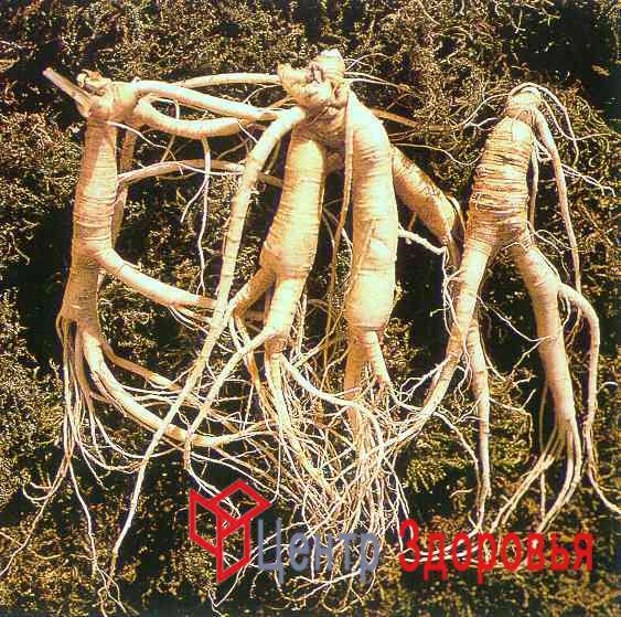корень валерианы