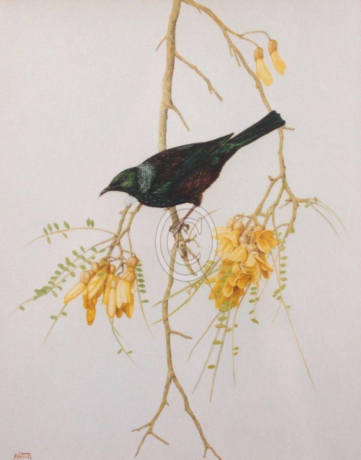 New Zealand Tui on Kowhai tree. Fine art giclee print available.