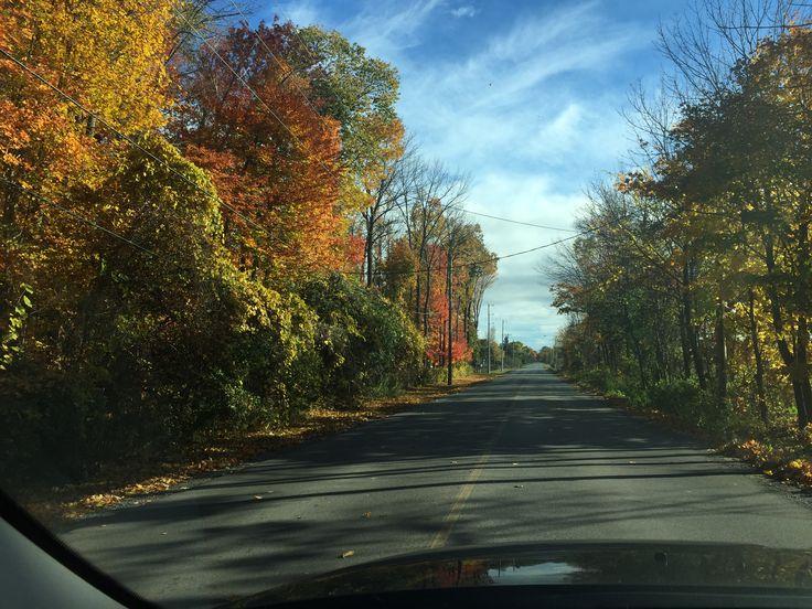 Fall in my neighbourhood 2016/10