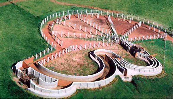 Cattle Pens~Cattle Chute's