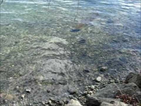 Peaceful water sounds video
