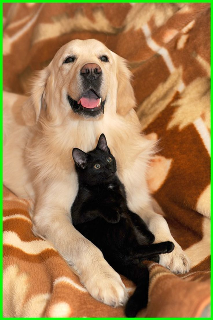 Cat Vs Dog What About Cat And Dog Minipet Online Pet Boutique Is A Melbourne Based For Small Dogs C Chat Contre Chien Chien Chat Comme Chien Et Chat