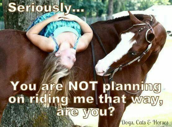 You're not riding me like that right?   My horse all the time