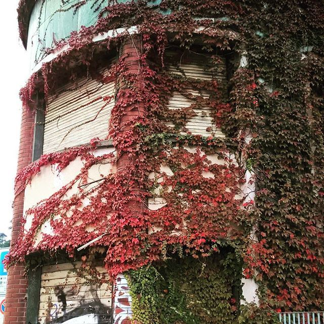 #modern #ruins #abandoned #abandonedplaces #shotonmylumia #shotonlumia #lumiaphotography #abandoned_junkies #graffiti #urban #decay #plants #rovine #abbandonato #instagrammers #instamood #igers #igersitalia