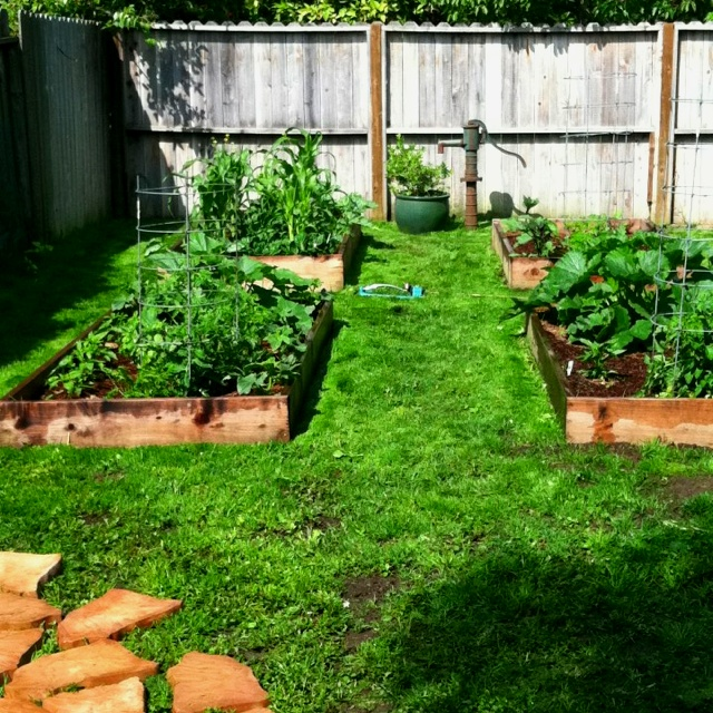Starting A Garden In Backyard | Mystical Designs and Tags