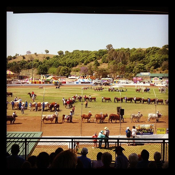 Parade of Champions - Lismore Agricultural Show 2012 (my pic)