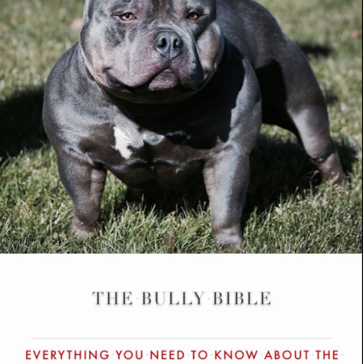 THE BULLY BIBLE: Everything You Need To Know About The American Bully • — Available For Sale in iTunes