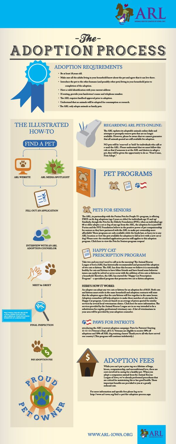 the process of adopting a pet They want to see their pets go to loving, permanent homes where they will be  properly cared for the process of adopting a pet from a shelter can be extensive .