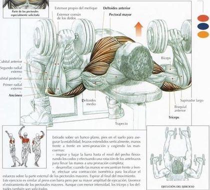 Los 5 mejores ejercicios para tríceps con mancuernas. Los tríceps son los músculos situados en la región posterior del brazo, su constitución física se debe a tres porciones las cuales son: porción larga y vastos interno y externo. Los tríceps...