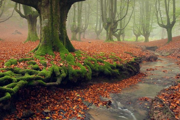 Located in the Basque Country in Spain, Otzarreta Forest is a beautiful part of Gorbea Natural Park. The ancient trees, mixed with the foggy atmosphere, gives this forest a mystical air. These crazy trees definitely deserve a spot on the list of weirdest trees on earth.
