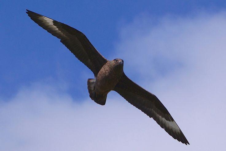 Storjo / Runde bird and treasure island # Norway