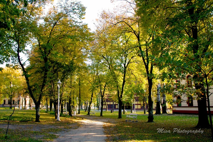 vibrant yellow trees in autumn