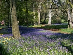 Thorp Perrow Arboretum, Bedale, North Yorkshire, a beautiful place to spend a sunny spring afternoon.