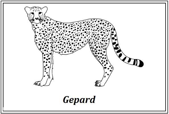 epard