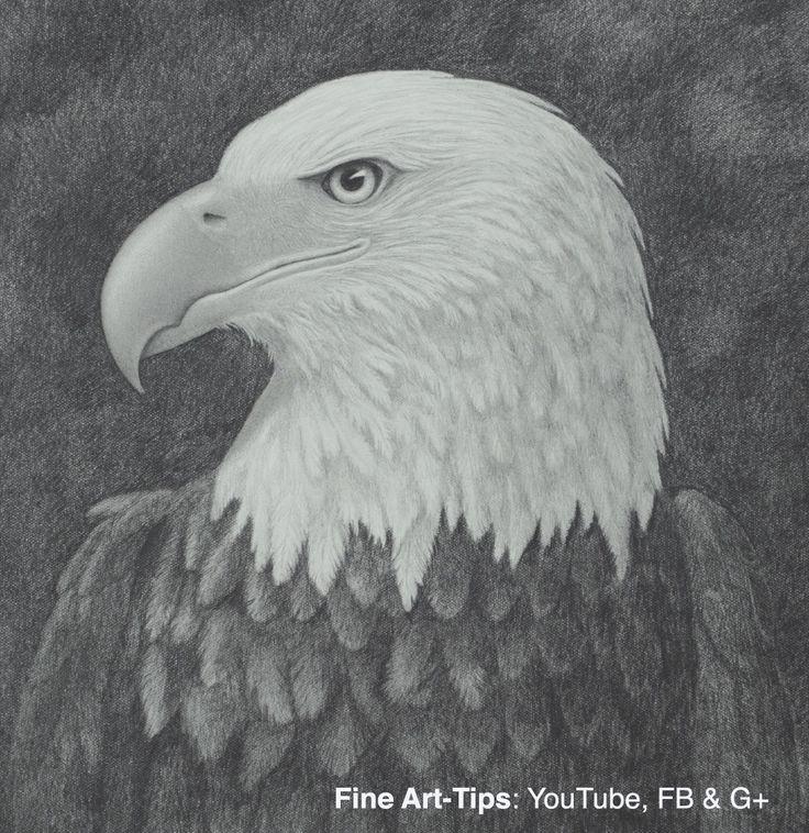 Bald Eagle Head, How to Draw - Narrated #art #drawing #FineArttips #baldeagle #artitstleonardo #LeonardoPereznieto #tutorial  Take a look to my book here: http://www.artistleonardo.com/#!ebooks-
