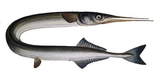 Une partie de pêche en mer de la digue aux Sables
