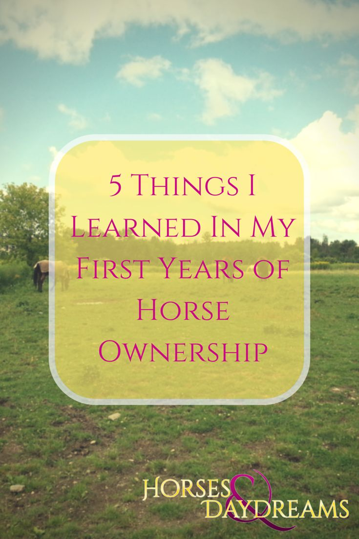 5 Thinks I Learned in my First Years of Horse Ownership | horsesanddaydreams.com