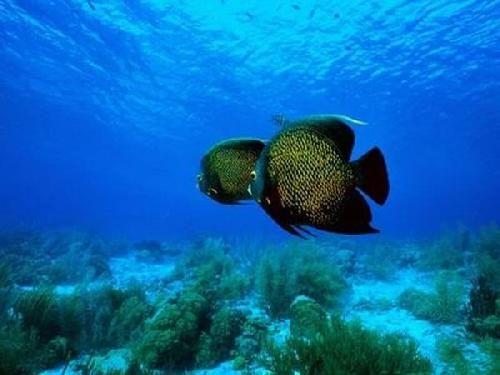 Podmořský svět 3 - Zvířata - Obrázky - PC Tapety na plochu zdarma ...