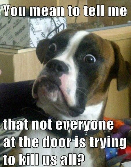 wait...what?: The Doors, Funny Dogs, Boxers Dogs, Funny Pictures, Dogs Memes, Too Funny, So Funny, Animal, Dogs Face