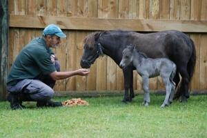 Mini horses!!! I am so there...
