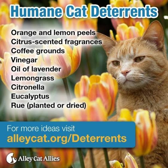 Not everyone loves feral cats. Here are some ways to keep them out of your yard without harming either them or the environment. From Google+