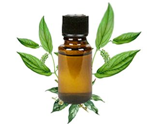 Buy Online Brown Camphor oil - 100% Pure and Fresh Natural Essential Oils.You Can Buy Various High Quality Brown Camphor Oil Products from http://www.onlynaturalessentialoil.com