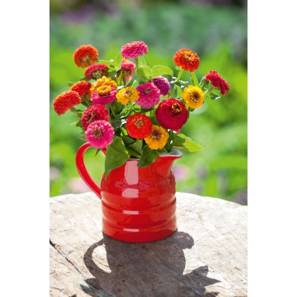 I have just purchased Zinnia elegans 'Sprite Mix' from Sarah Raven - https://www.sarahraven.com/flowers/seeds/annuals/zinnia_elegans_sprite_mix.htm