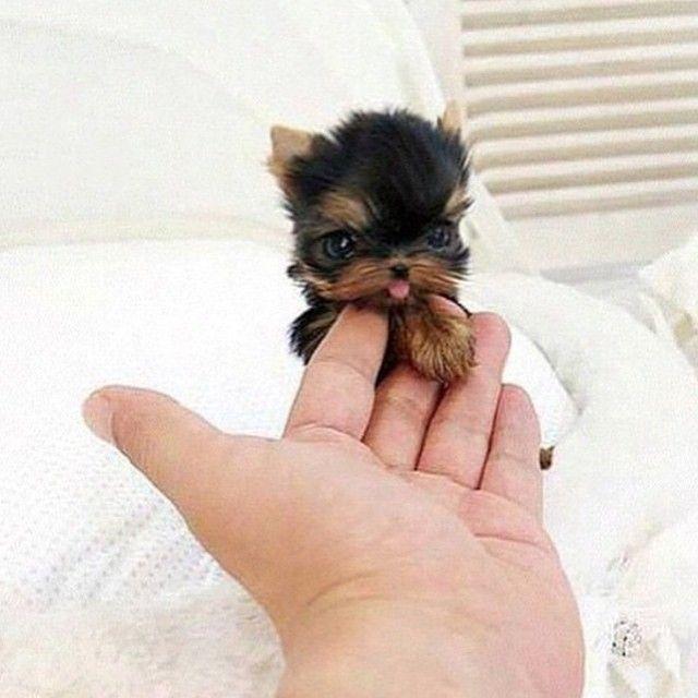 "@couture_elegance's photo: ""So cute  Tag 3 dog lovers❗️ Follow @theeliteaddict  @theeliteaddict"""