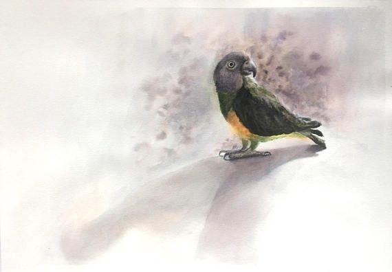 Senegal Parrot original watercolor painting. Bird art