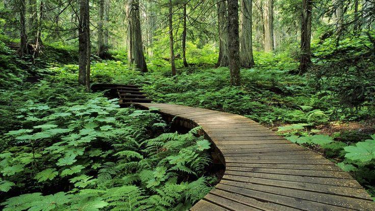 Dat Nature: Hidden Road in The Woods
