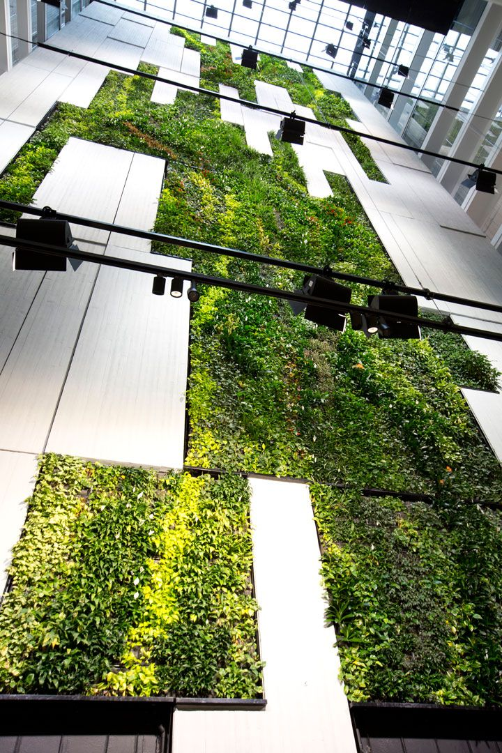 Towering Ahead with Australia's Tallest Indoor Green Wall installed in October 2016 by Fytogreen, Australia's leading specialist in sustainable vertical gardens.