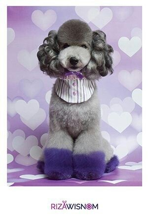 Dog Coat Color And Temperament Creative Grooming