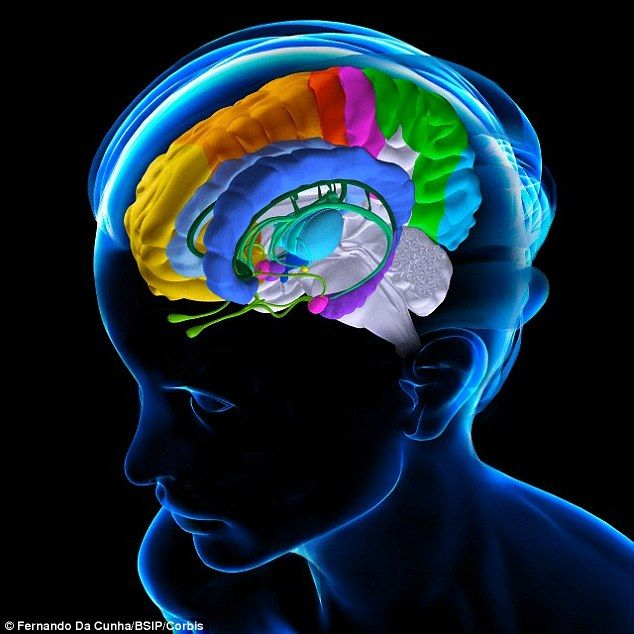 The corticolimbic system incorporates the amygdala (pink), hippocampus (purple), anterior cingulate cortex (blue) and ventromedial prefrontal cortex (yellow) brain regions illustrated above
