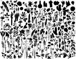 Australian native flower silhouette - Google Search