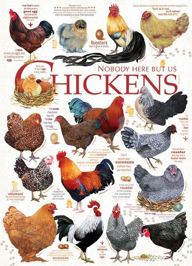Chicken Quotes 1 000 Piece Puzzle Chickens Backyard Best Egg