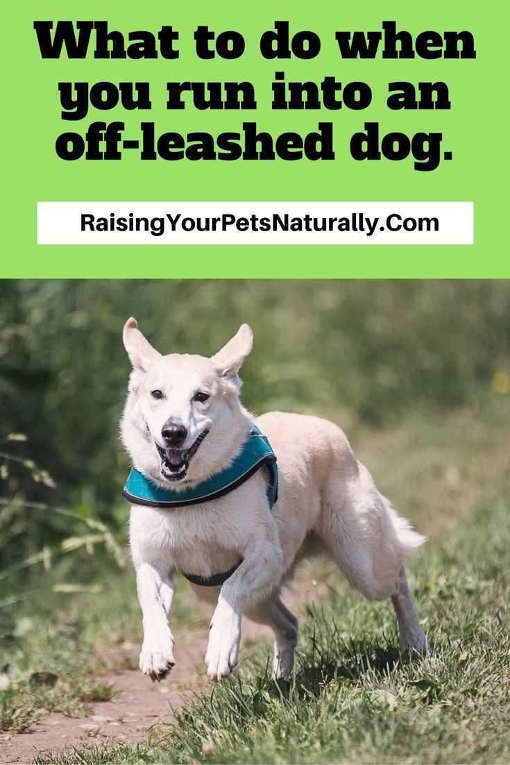 Running into an Aggressive Off-Leashed Dog What to do to Stay Safe. I have the right and an obligation to protect my family. Period. End of story. As I start to list some ideas to keep your dog safe, it is important to know that nothing is 100%.