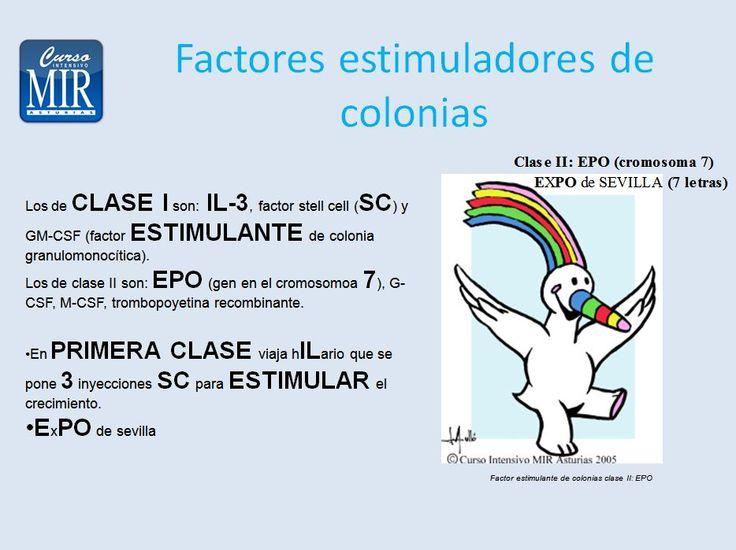 Factores estimuladores de colonias - #Hematología