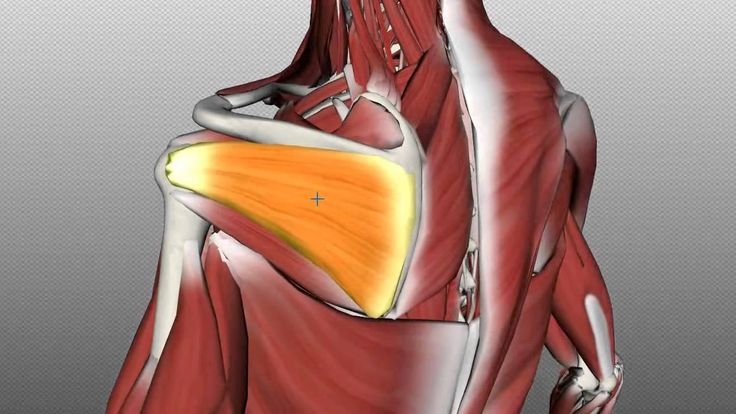 Rotator Cuff Tutorial - Anatomy Tutorial