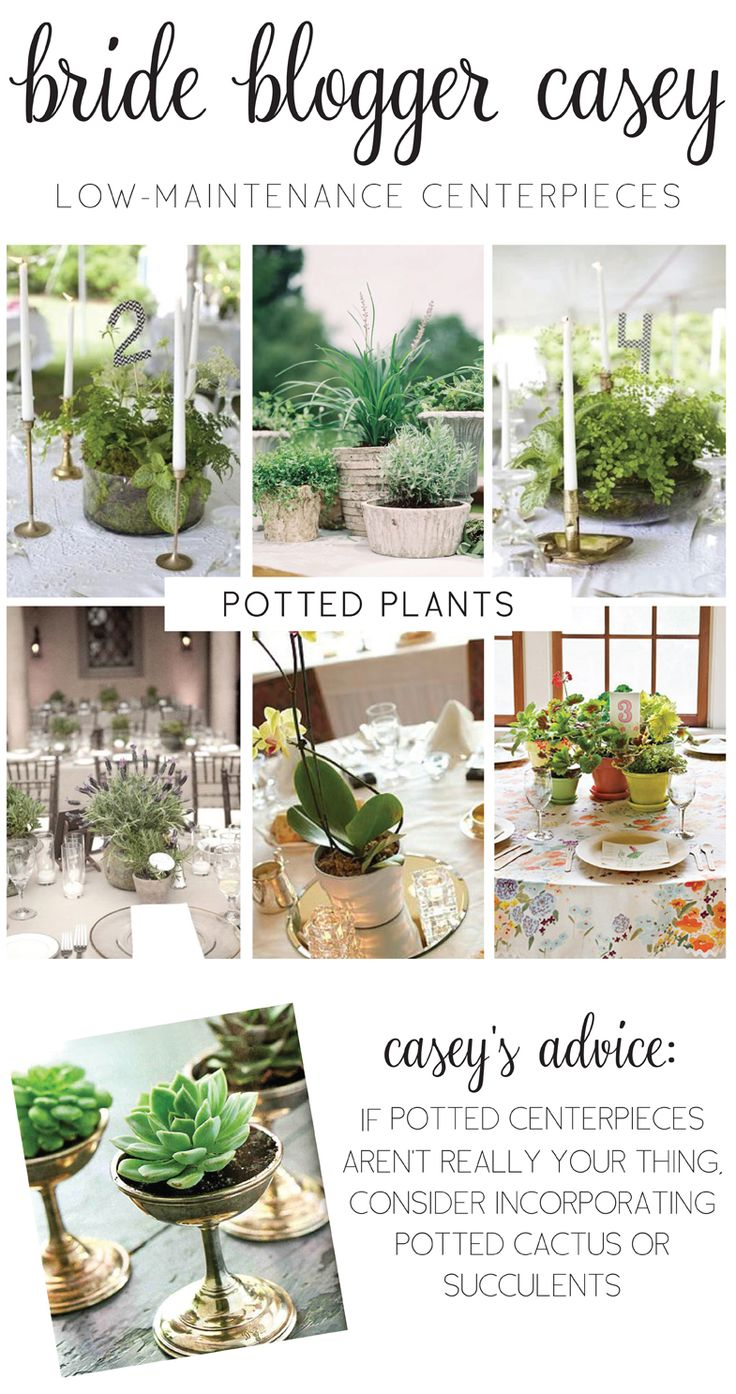 Bride Blogger Casey | Low-Maintenance Potted Plants as Centerpieces