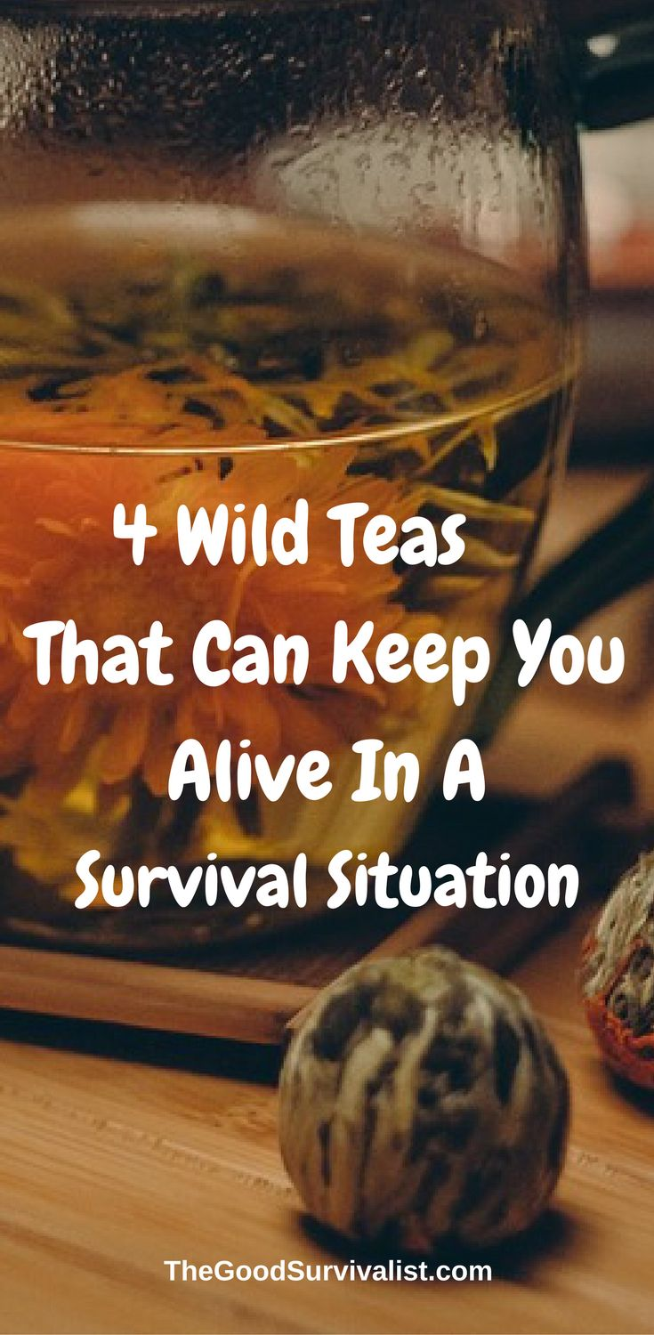 Here are a few wild teas that anyone looking to survive the wilderness should know how to identify and brew: http://www.thegoodsurvivalist.com/4-wild-teas-that-can-keep-you-alive-in-a-survival-situation/