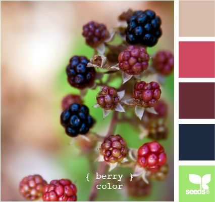 berry color