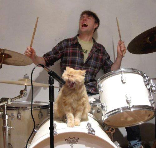 cat: Cat Steven, Rockers, Singing, Funny Cat, Rocks Stars, Rolls, Heavy Metals, The Bands, Animal