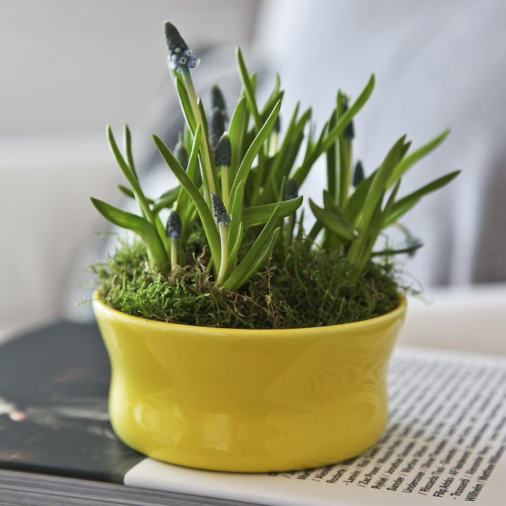Use the Mano Bowl for your beautiful spring flowers